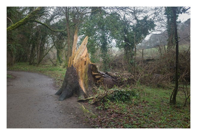 Casualty at Respryn woods