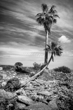 Davis Islands, Tampa Bay