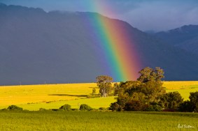 Apparently, there lies not gold at the end of the rainbow, but beef!