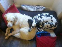 Willow's Still A Pillow