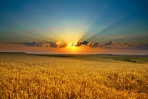 An image of a sunset over a golden field
