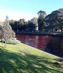 river-turns-blood-red-tigre-buenos-aires-argentina-2