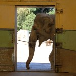 The elephant in the room; why online publishing is very sick