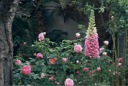 Roses are spikey perennials go perfectly together.