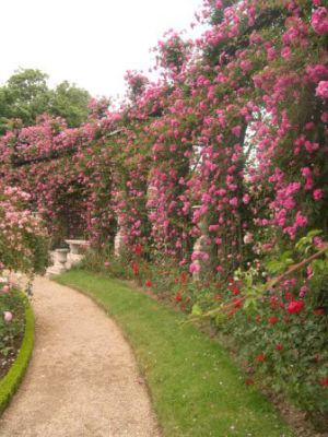 How about a wall of roses!