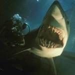 Warner estrena por sorpresa el trailer en español de Deep Blue Sea 2