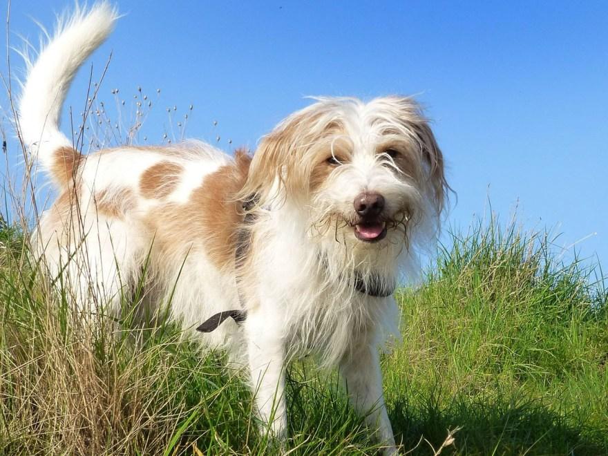 Einen solchen Hund hätte ich gern