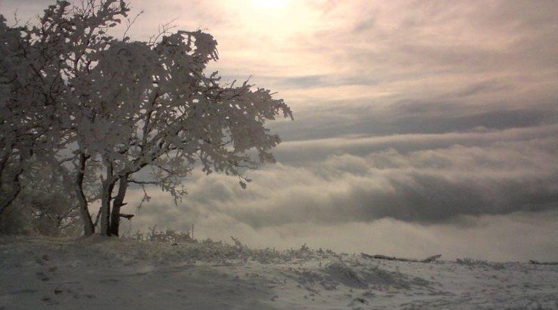 Дерево на вершине Машука - Павел Богданов