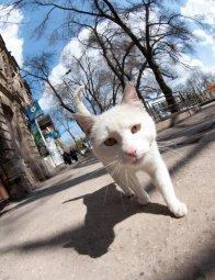 Кот н аулице Мира