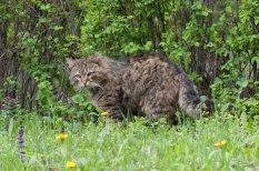 Еще один суровый мартовский кот