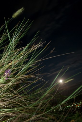 Трава на склоне
