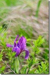 Тестовое фото Nikkor 50 1.8 D - цветы