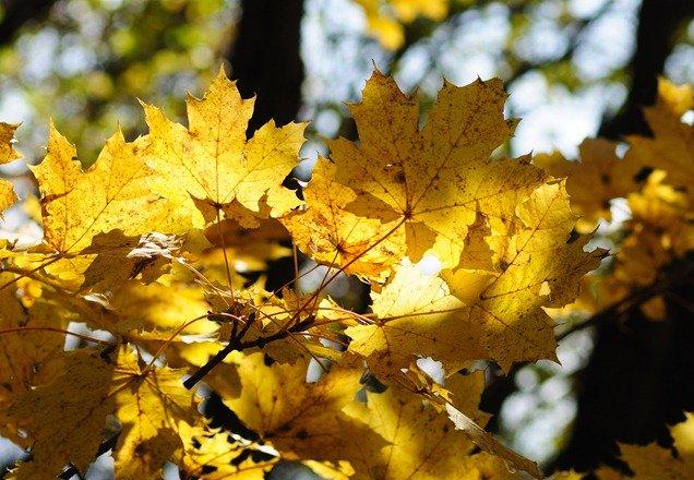 Осенние фотографии Машука