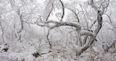 Туманно-лесная панорама на горе Змейка