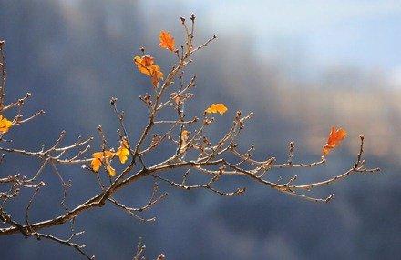 Золотые листья