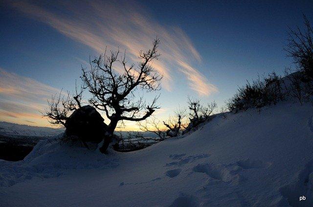 Снег, следы и дерево