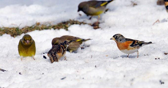 Птицы Пятигорска