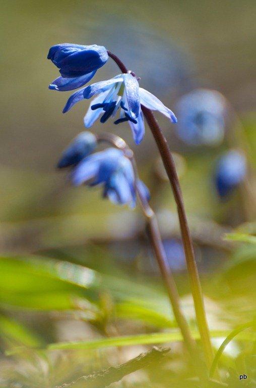 Цветы Пятигорска