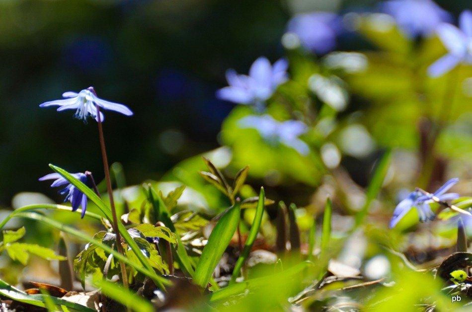 Первоцветы Машука