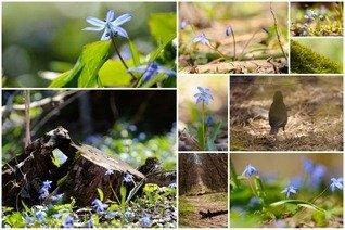 Весна на Машуке