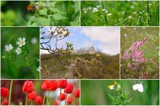 Весна идет по Пятигорску!