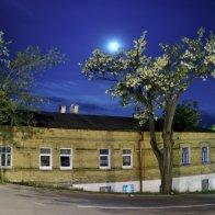 Ночь. Дерево. Луна.