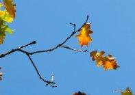 autumn-pyatigorsk-18