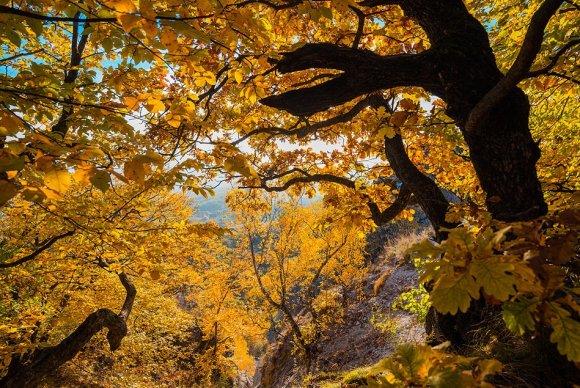 Дерево на склоне Бештау