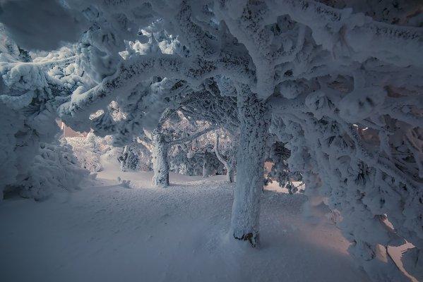 Фото под сосной