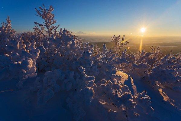 Кусты в снегу
