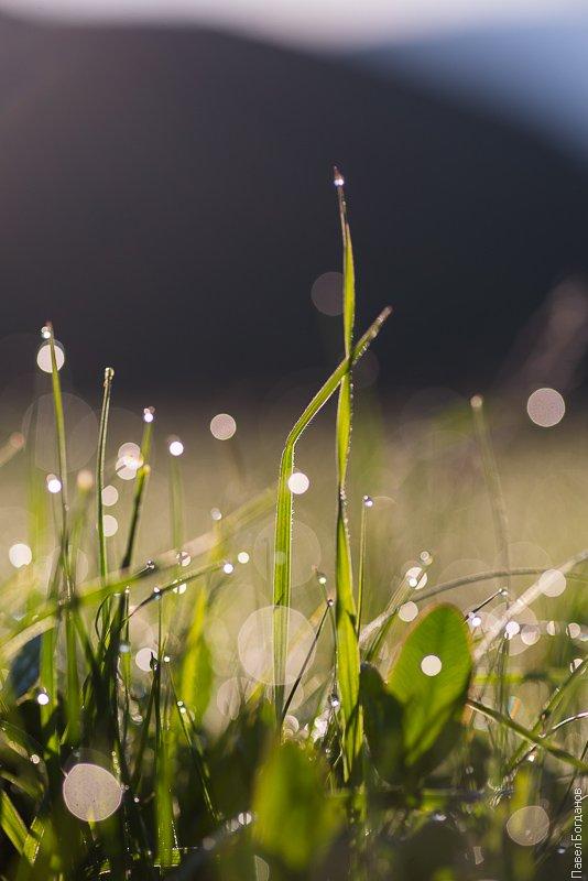 Трава в каплях росы