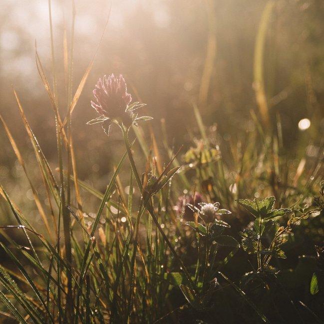 Утренняя роса