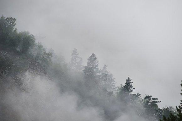 Лес на склоне Цейского ущелья
