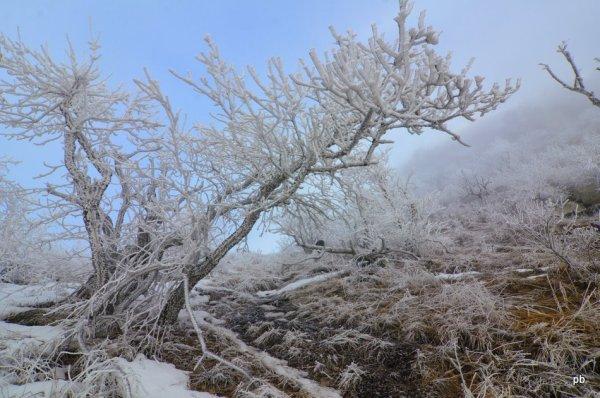 Бештау, деревья в инее