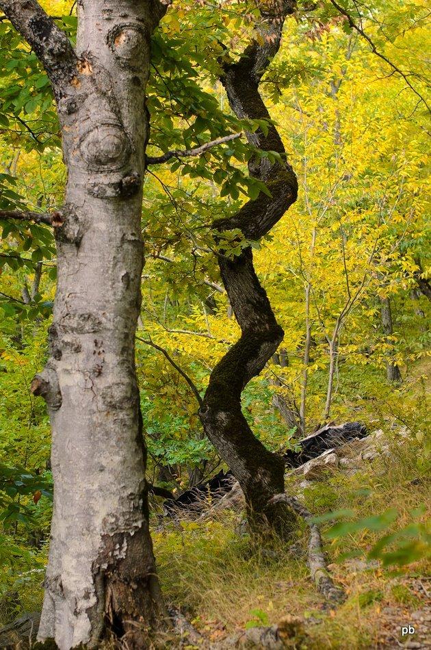 Дерево-зигзаг