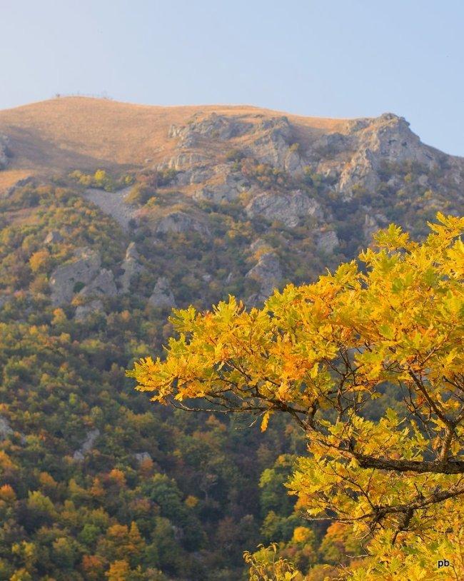 Желтая листва клёна
