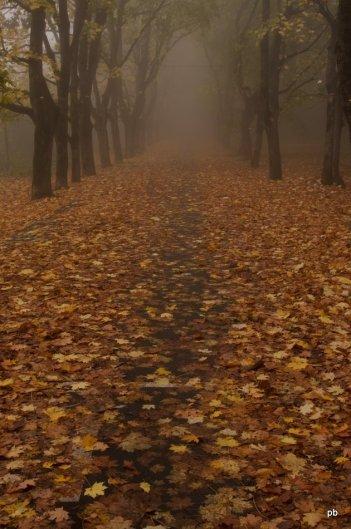 Покрытая листвой дорога
