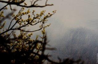 Горит лес на Машуке