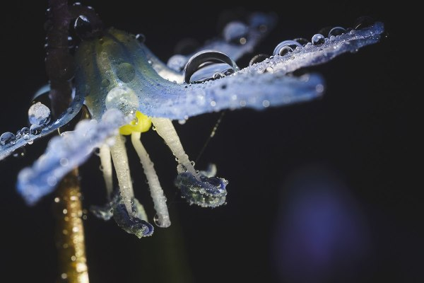 Как фотографировать цветы макро в каплях