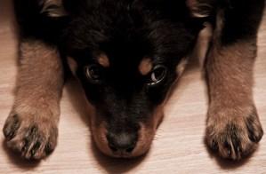 Roxy (Plzeňˆ | duben 2012)