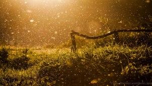 Pohádkový západ slunce u Berounky (Rakolusky | červen 2012)