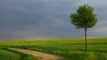 Příchod bouře (Chotíkov | květen 2011)