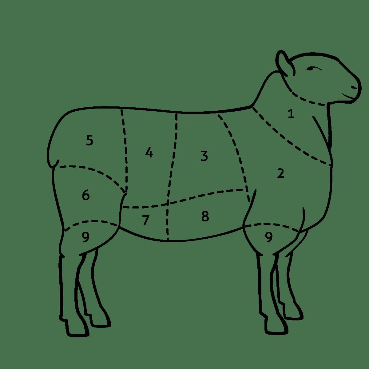 Decoupe Viande Agneau Grossiste Boucher Fournisseur