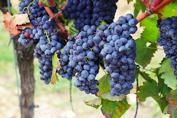 Pert_grapes