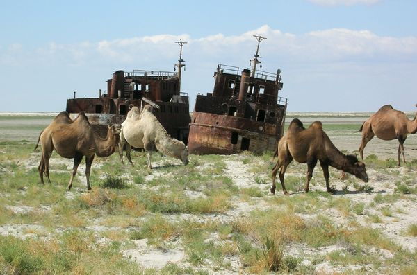 01 aral-sea-llamas-ship-story-picture_16957_600x450