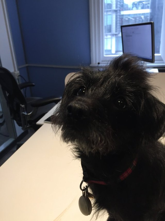 Sara Stewart @twowitwowoo Jan 26 Delighted to meet Mitzy, the office dog, plus lovely meeting with @WantDontWant