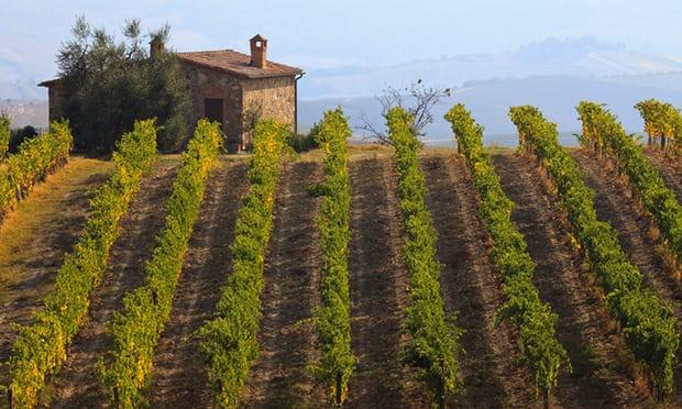 Zasadi vinove loze, Toskana. Italija je, uz Španiju i Francusku, zemlja čij su prihodi i prinosi pretrpeli najveću štetu od klimatskih promena