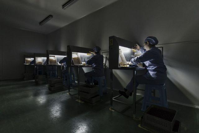 Zaposleni ispituju bočice rastvora adrenalin-hidrohlorida za injekcije u Vuhanu, Kina, 13. jun (Qilai Shen/Bloomberg)