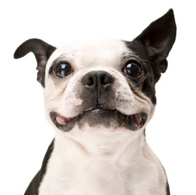 Pet Care Professional fl