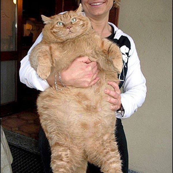 Hey Internet: Normal Sized Cats are Cute Too